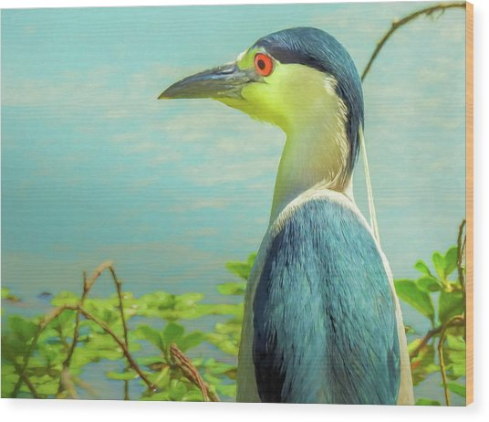 Black-crowned Night Heron Digital Art Wood Print