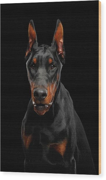 Black Doberman Wood Print