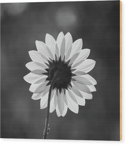 Black-eyed Susan - Black And White Wood Print