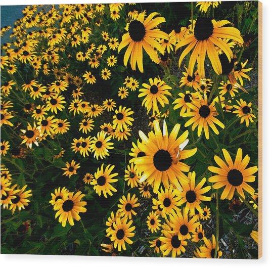 Black-eyed Susan Flowers Wood Print