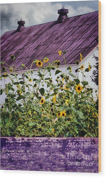 Black Eyed Susans Wood Print