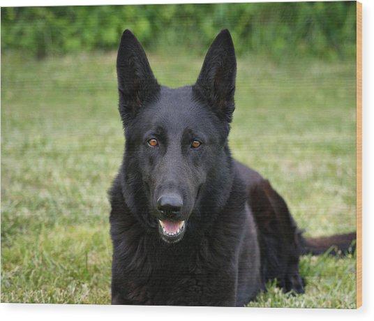 Black German Shepherd Dog II Wood Print