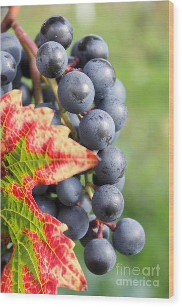 Black Grapes On The Vine Wood Print
