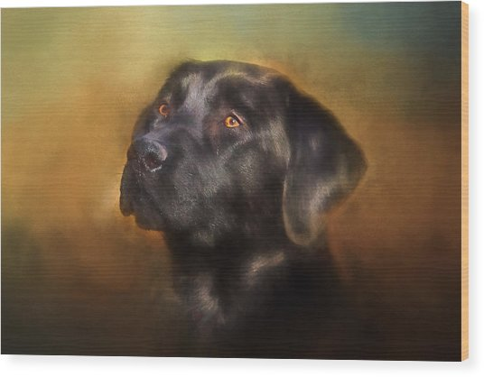 Black Lab Portrait 2 Wood Print