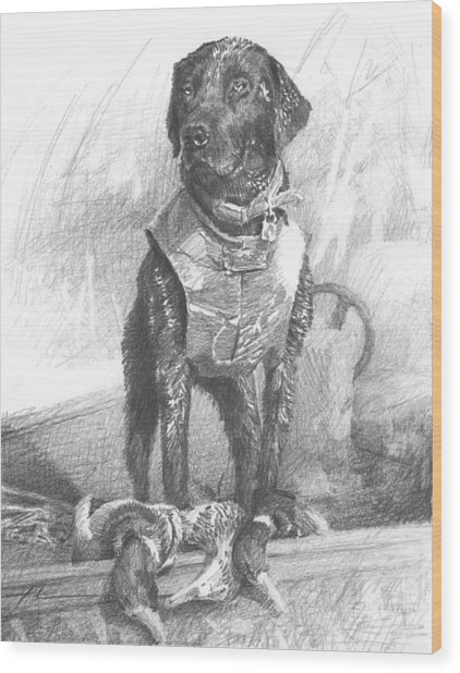 Black Labrador Duck Hunting Pencil Portrait Wood Print by Mike Theuer