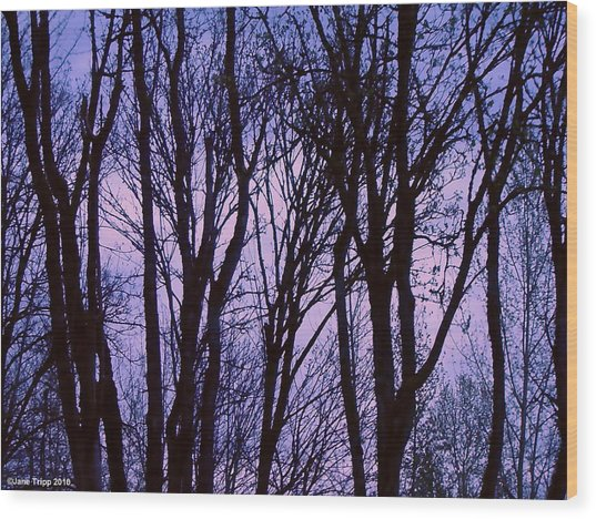 Black Lace Wood Print by Jane Tripp
