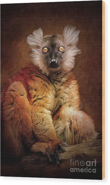 Black Lemur Wood Print