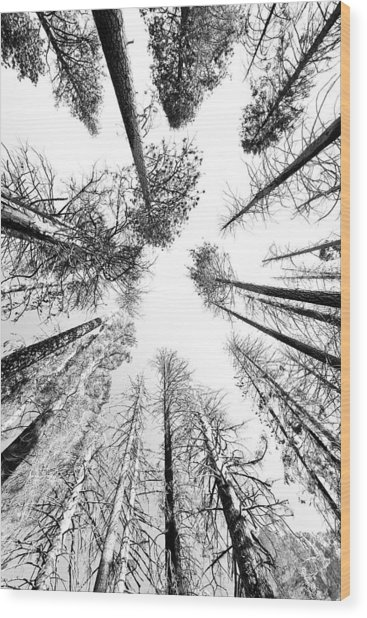 Black N White Sky-trees Wood Print by Rick Pham