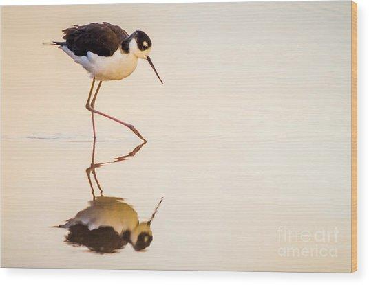 Black-necked Stilt Wood Print by Emily Bristor