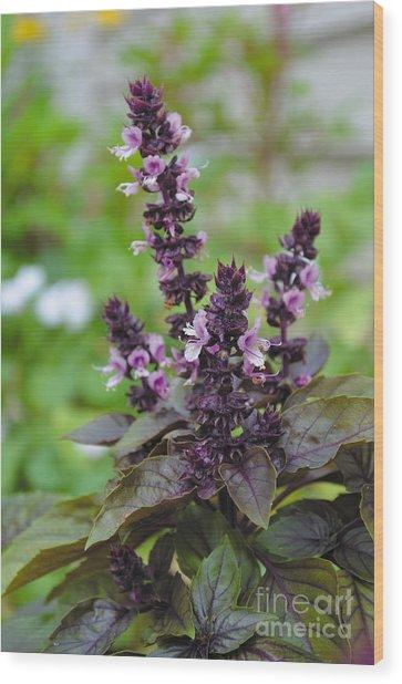 Black Opal Basil Flower Wood Print