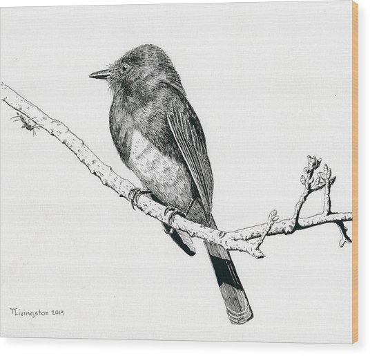 Black Phoebe Wood Print