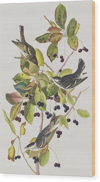 Black Poll Warbler Wood Print