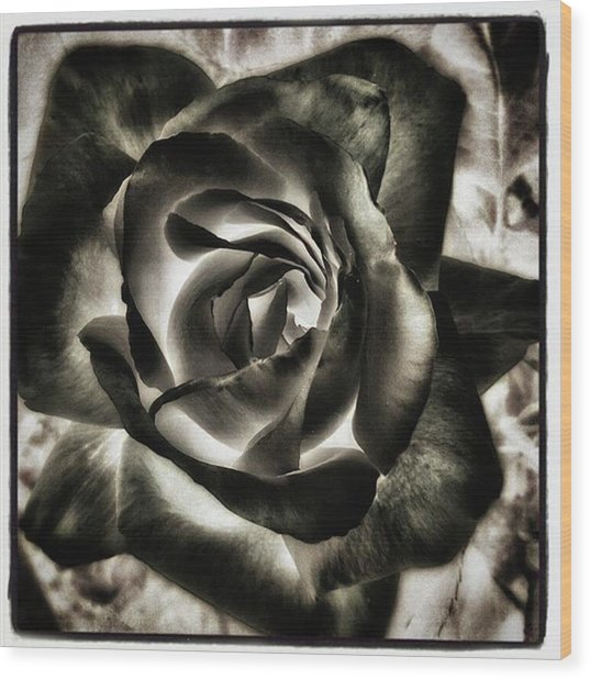 Wood Print featuring the photograph Black Rose. Symbol Of Farewells by Mr Photojimsf