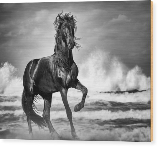 Wood Print featuring the photograph Black Stallion In Waves by Gigi Ebert