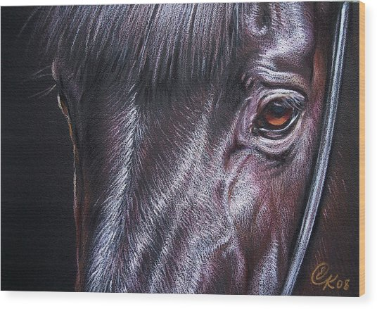 Black Stallion Wood Print
