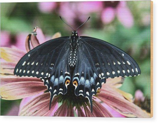 Black Swallowtail 3 Wood Print