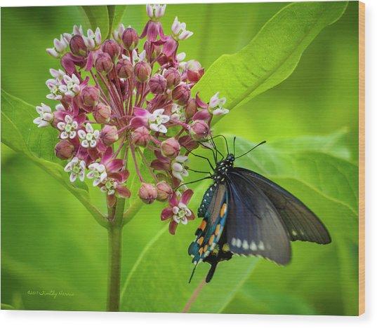 Black Swallowtail 54 Wood Print