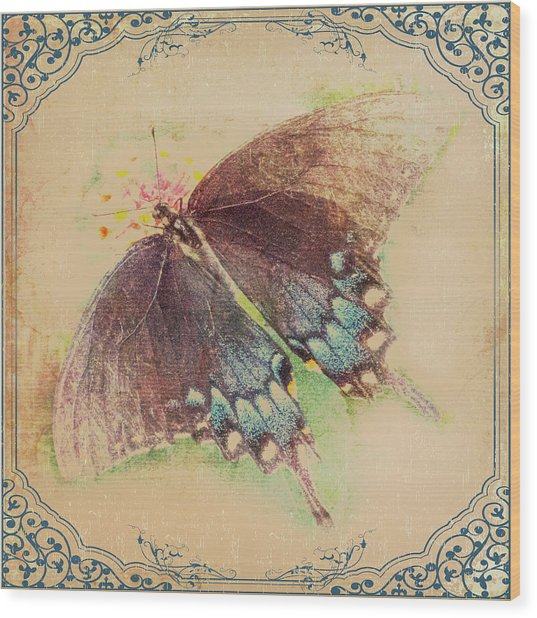 Black Swallowtail Butterfly Framed  Wood Print