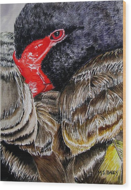 Black Swan Wood Print by Maria Barry