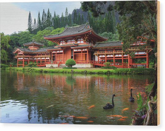 Black Swans At Byodo-in Wood Print