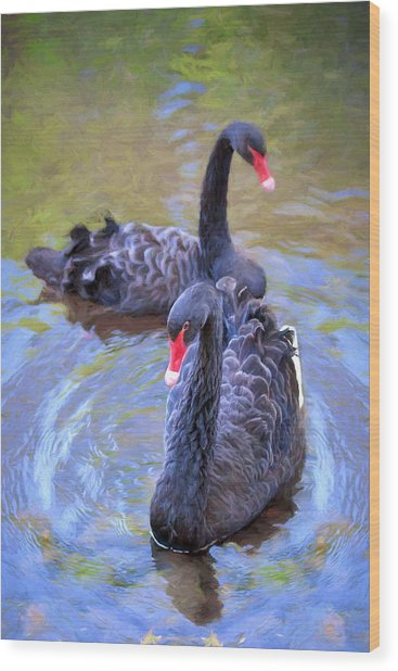 Black Swans Wood Print