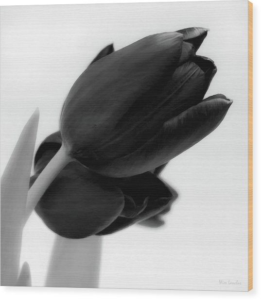 Black Tulips Wood Print
