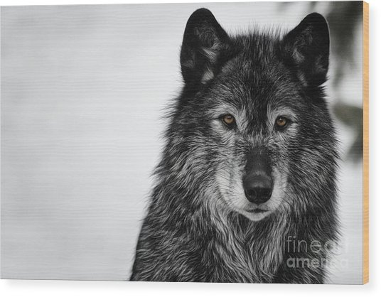 Black Wolf I Wood Print