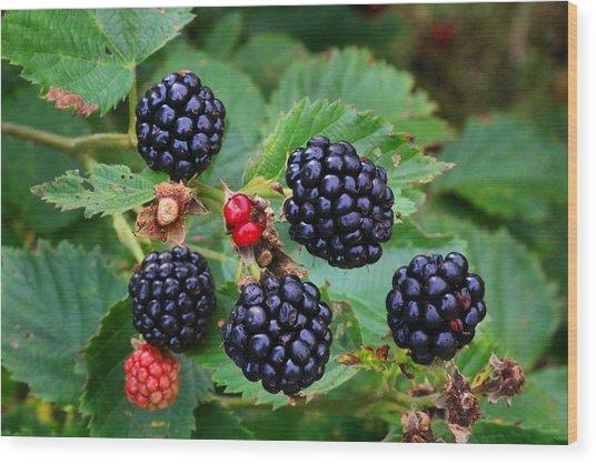 Blackberries 2 Wood Print