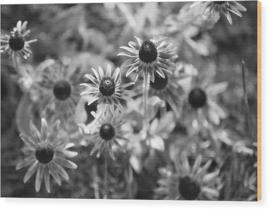 Blackeyed Susans In Black And White Wood Print by Paula Coley