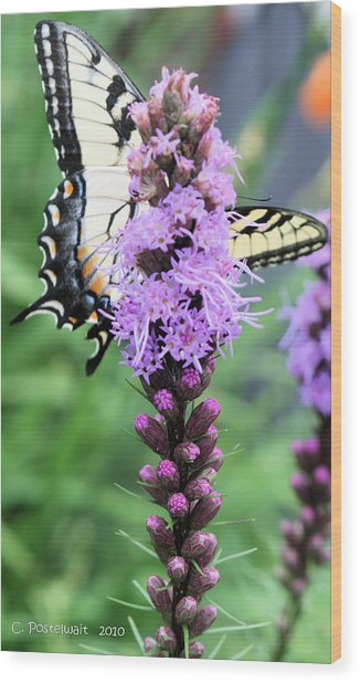 Blazing Stars And Yellow Swallowtails Wood Print
