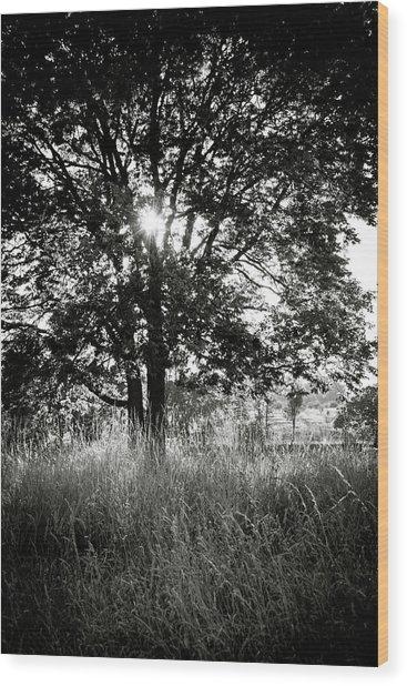 Blazing Tree Wood Print