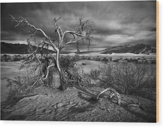 Bleached Bones Wood Print