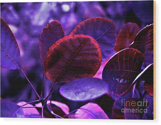 Bleeding Violet Smoke Bush Leaves - Pantone Violet Ec Wood Print