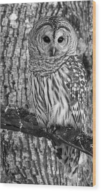 Blending In - 365-187 Wood Print