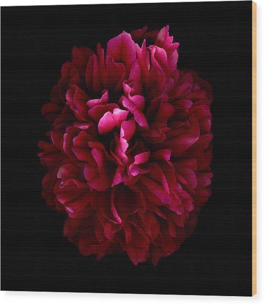 Blood Red Peony Wood Print by Deborah J Humphries