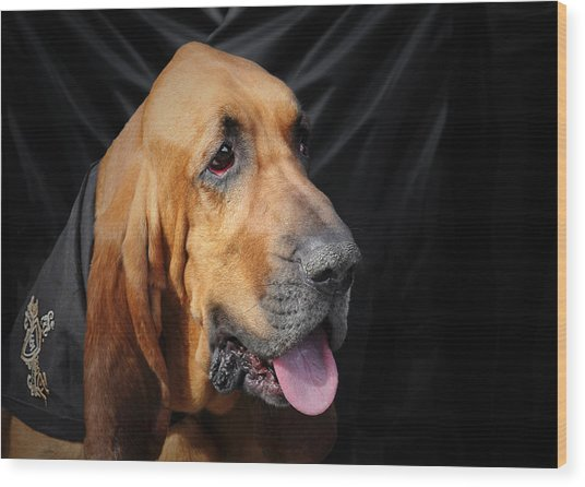 Bloodhound - Governed By A World Of Scents Wood Print