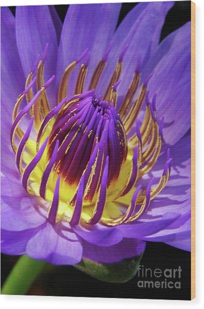 Bloom Burst Wood Print