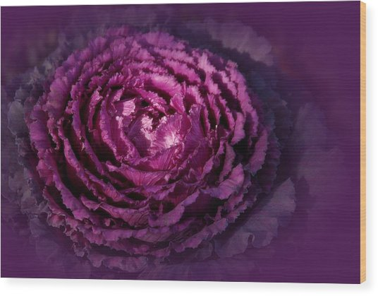 Blooming Cabbage Wood Print by Angie Tirado