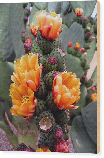 Blooming Cactus Wood Print