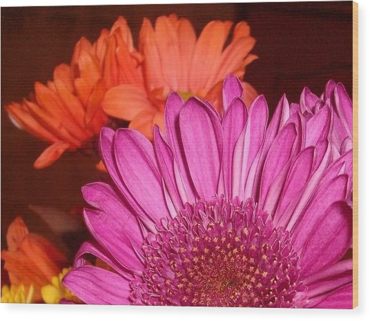 Blooming Colors Wood Print by LDPhotography Stephanie Armstrong
