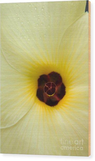 Blooming Okra Flower Wood Print by Julia Hiebaum