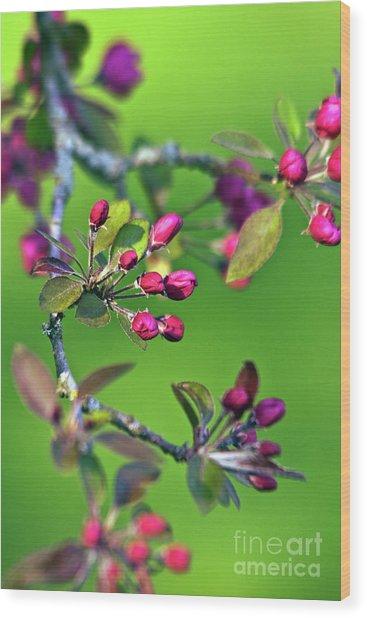 Blooming Spring Poetry Wood Print