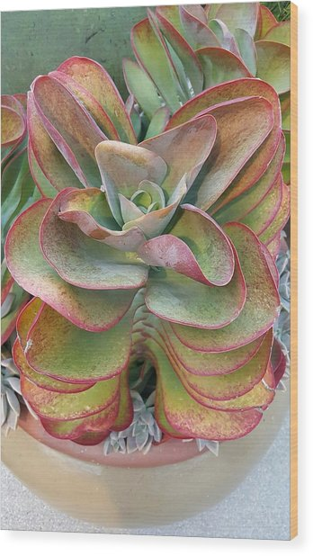 Blooming Succulent Wood Print