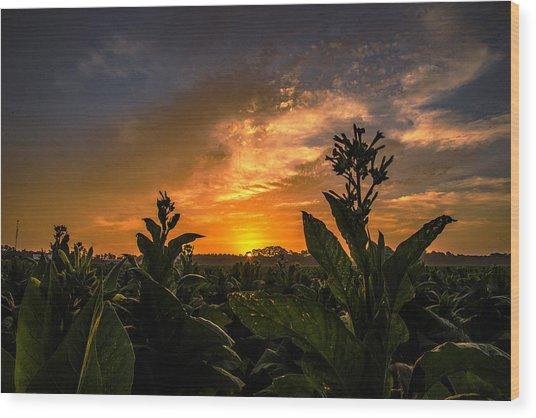 Blooming Tobacco Wood Print