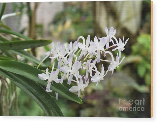 Blooming White Flower Spike Wood Print