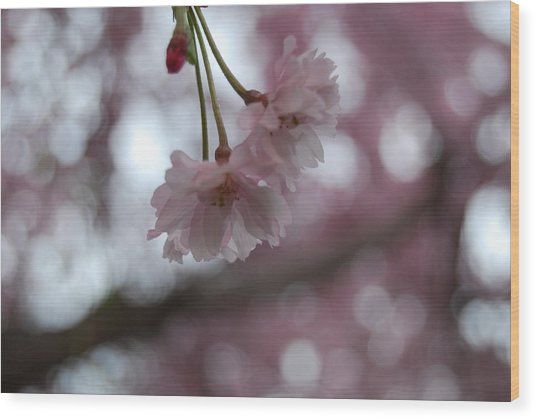 Blossom In Pink Wood Print by Peter  McIntosh