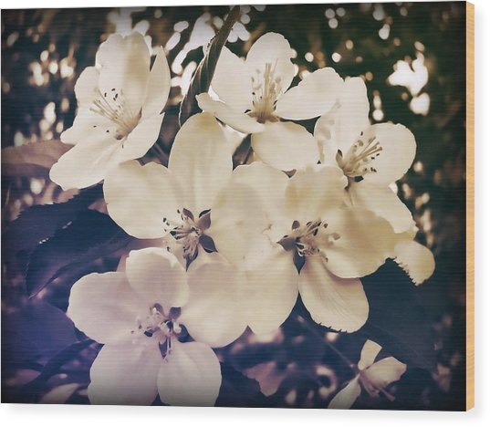 Blossom Wood Print by JAMART Photography