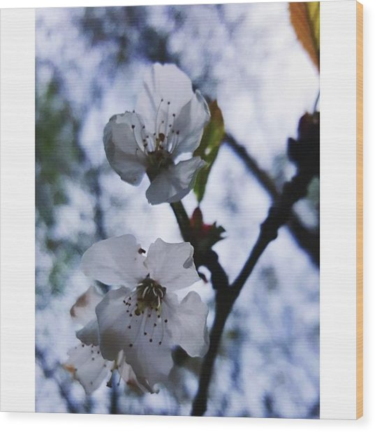 #blossom #spring #macro #flower #pretty Wood Print by Natalie Anne