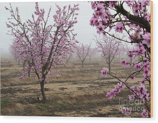 Blossom Trail Wood Print