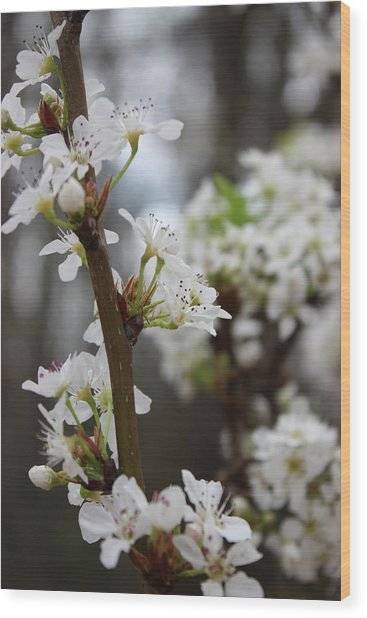 Blossoming Flowers Wood Print